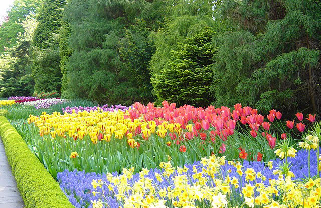 The flower garden Keukenhof, flower garden in Holland, vacation in the Netherlands
